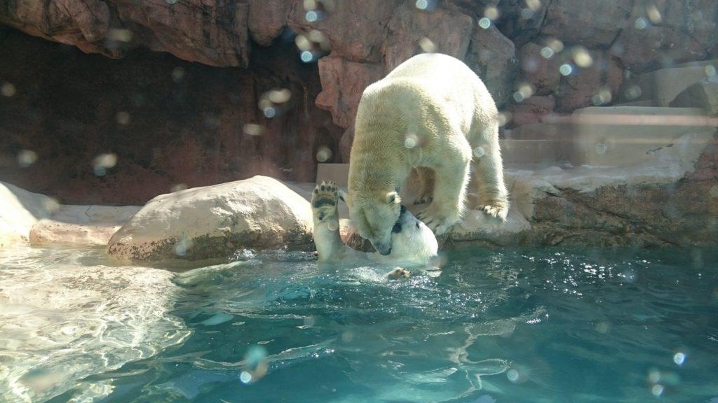 日本平動物園 ロッシーとバニラ