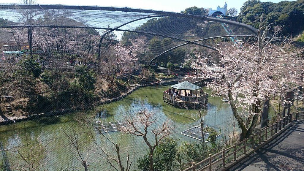 日本平動物園 フライングメガドーム