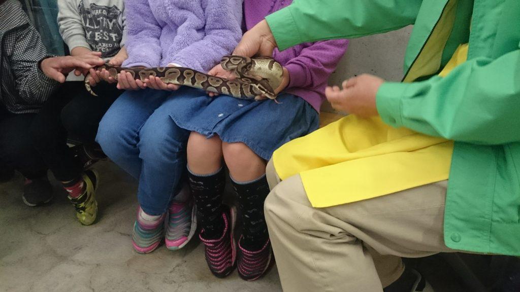 日本平動物園 ヘビふれあい