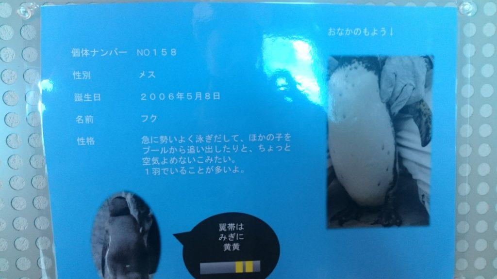日本平動物園 ペンギン
