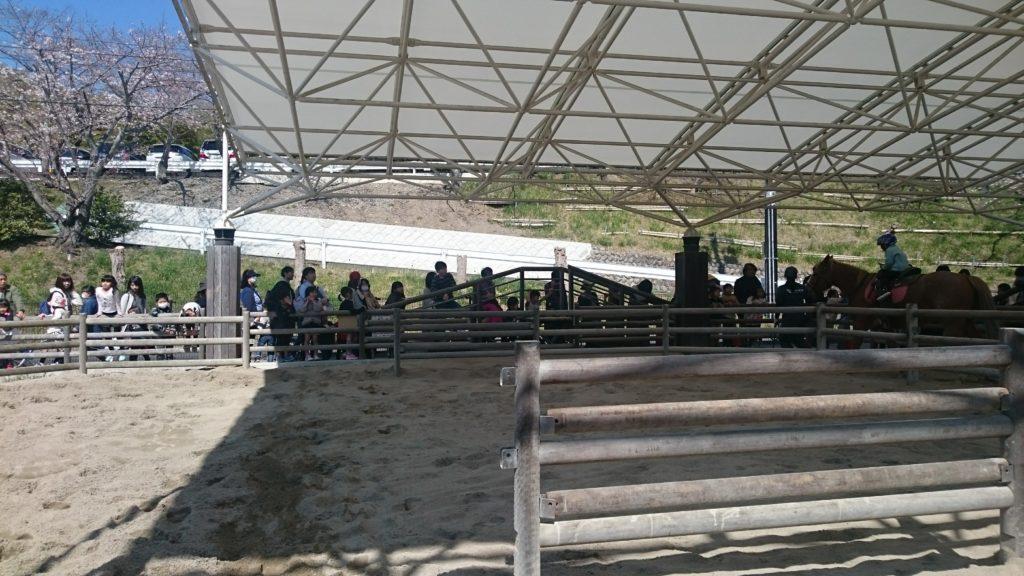 日本平動物園 乗馬