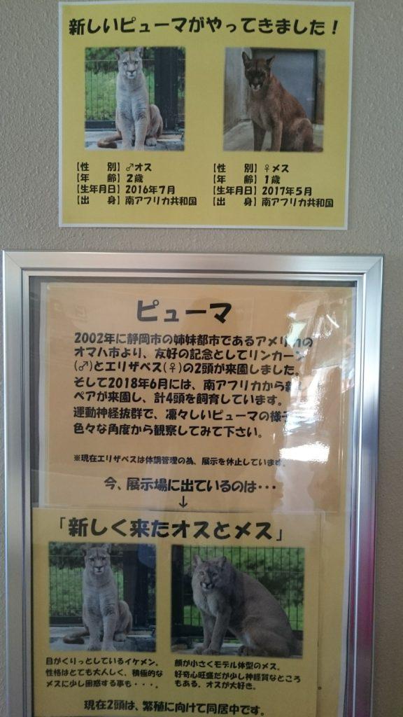 日本平動物園 ピューマ