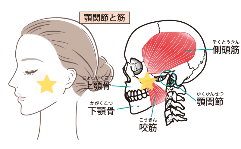 顎関節症のセルフケア